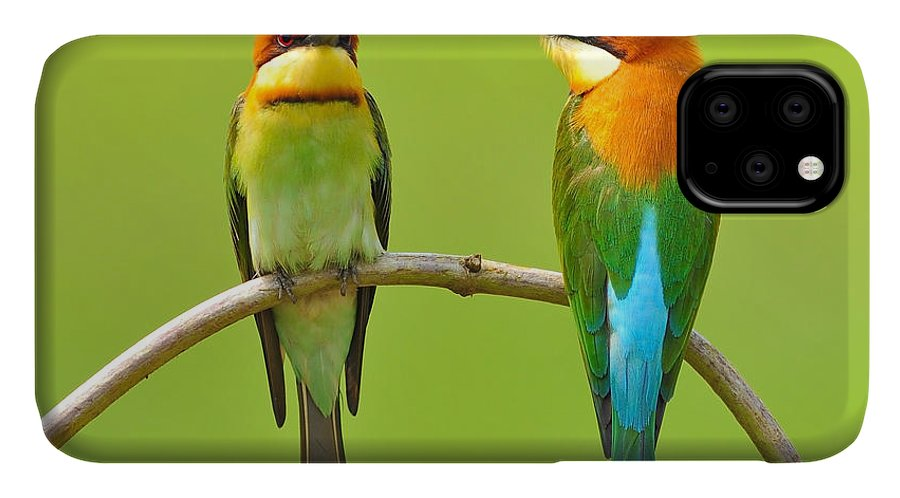 Quick IPhone Case featuring the photograph Couple Of Bee Eater Bird by Butterfly Hunter