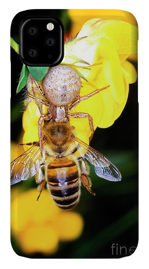 Honeybee IPhone Case featuring the photograph Crab Spider Hunting by Dr Keith Wheeler/science Photo Library