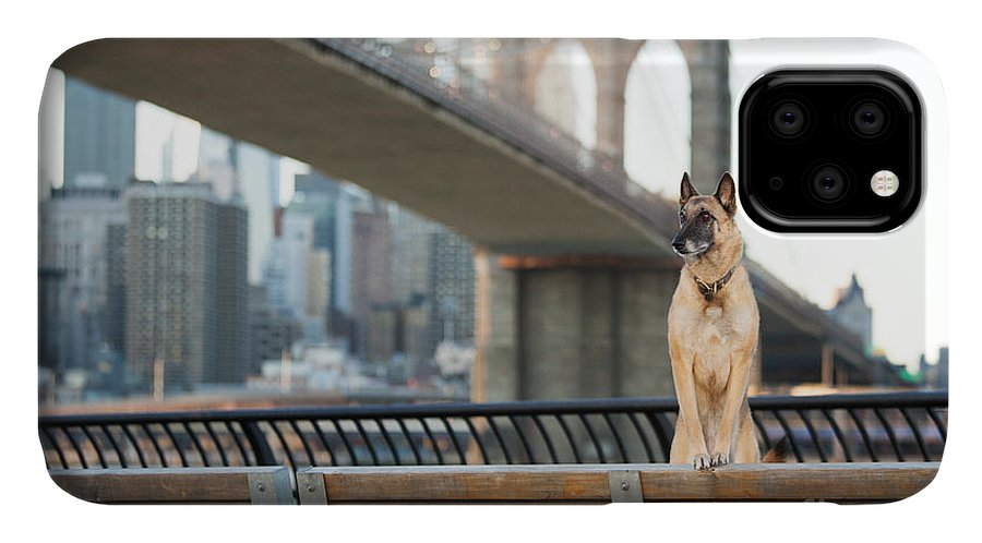 German IPhone Case featuring the photograph Dog Standing In Front Of Brooklyn by The Dog Photographer