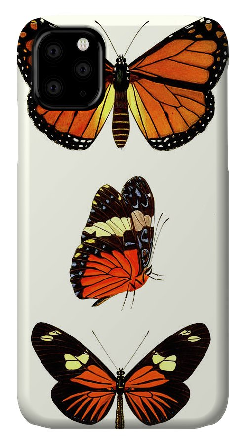 Animals & Nature+butterflies & Bees IPhone Case featuring the painting Entomology Series II by Blanchard