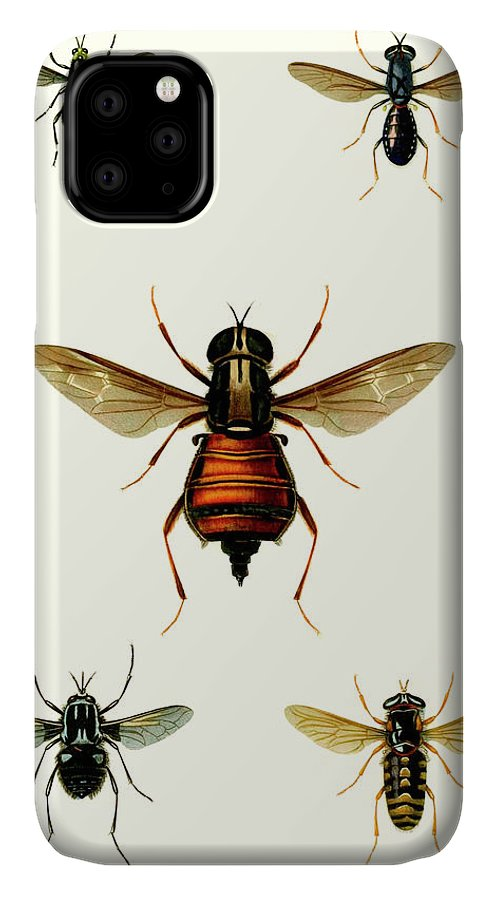 Animals & Nature+butterflies & Bees IPhone Case featuring the painting Entomology Series IIi by Blanchard