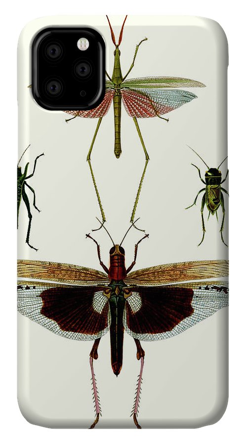 Animals & Nature+butterflies & Bees IPhone Case featuring the painting Entomology Series Vi by Blanchard