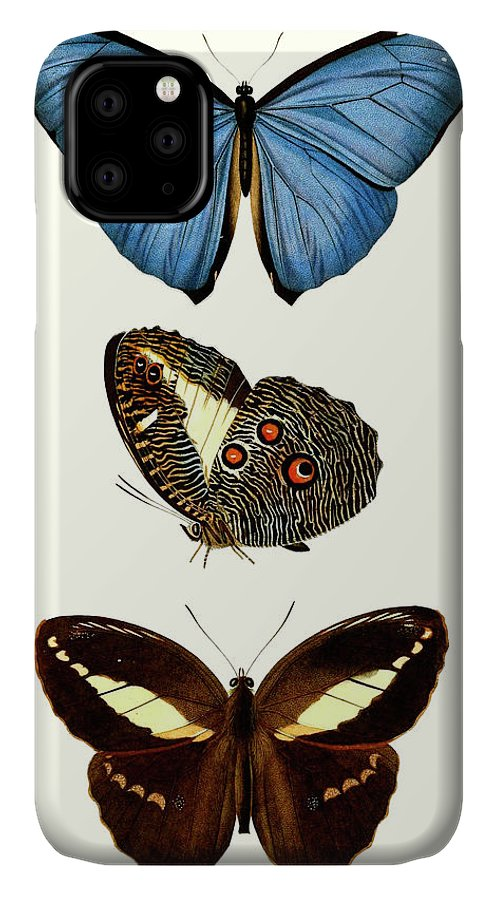 Animals & Nature+butterflies & Bees IPhone Case featuring the painting Entomology Series Viii by Blanchard