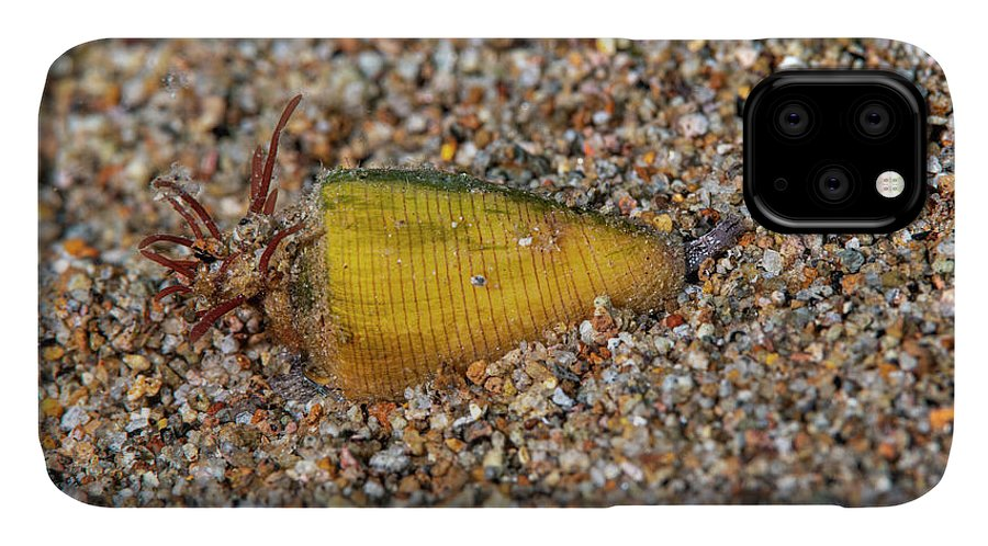 Animal IPhone Case featuring the photograph Fig Cone by Andrew Martinez