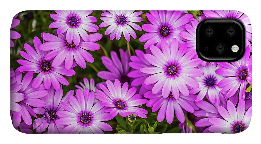 Flowers IPhone Case featuring the photograph Flower Patterns Collection Set 04 by Az Jackson