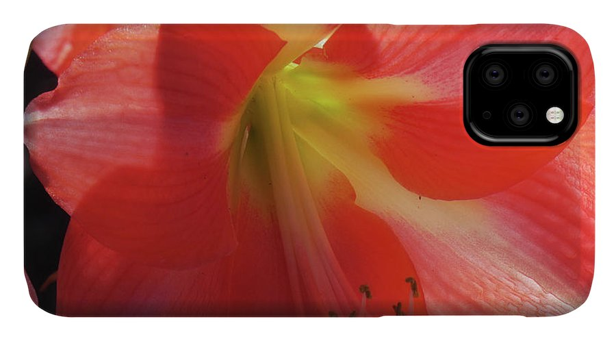 Flowers IPhone Case featuring the photograph Flowering Beauty I by Kathi Isserman