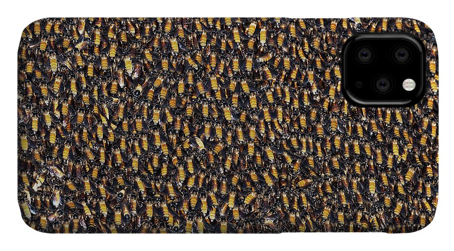 India IPhone Case featuring the photograph Jungle Bees by Dr P. Marazzi/science Photo Library