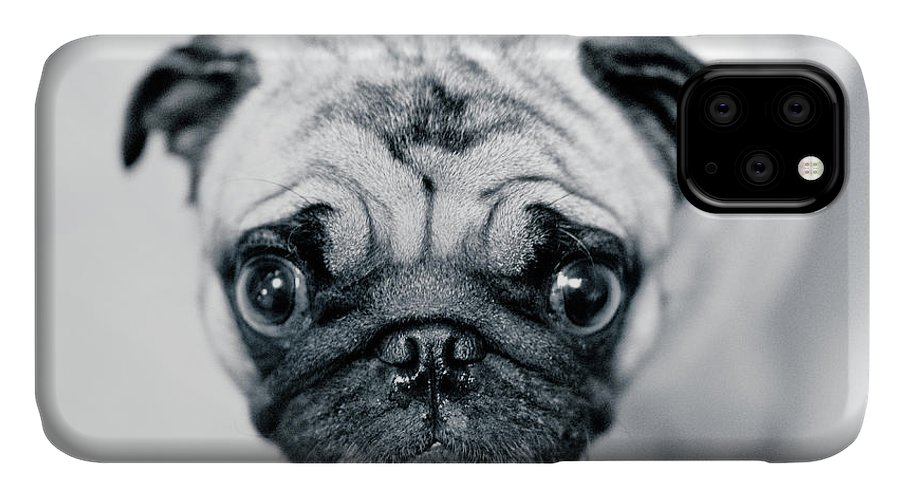 Pets IPhone Case featuring the photograph Just Enough by Eddy Joaquim