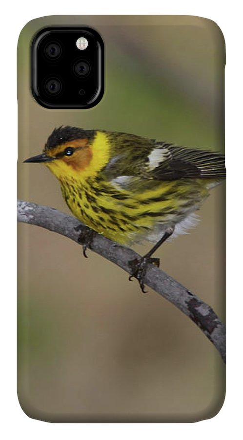 Warbler IPhone 11 Case featuring the photograph Male Cape May Warbler by Marlin and Laura Hum