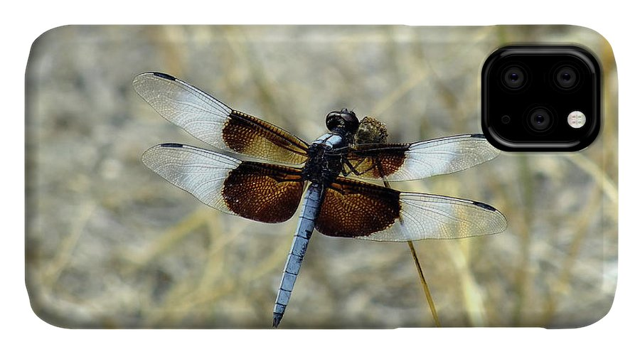Insect IPhone Case featuring the photograph Male Widow Skimmer by Bill Morgenstern