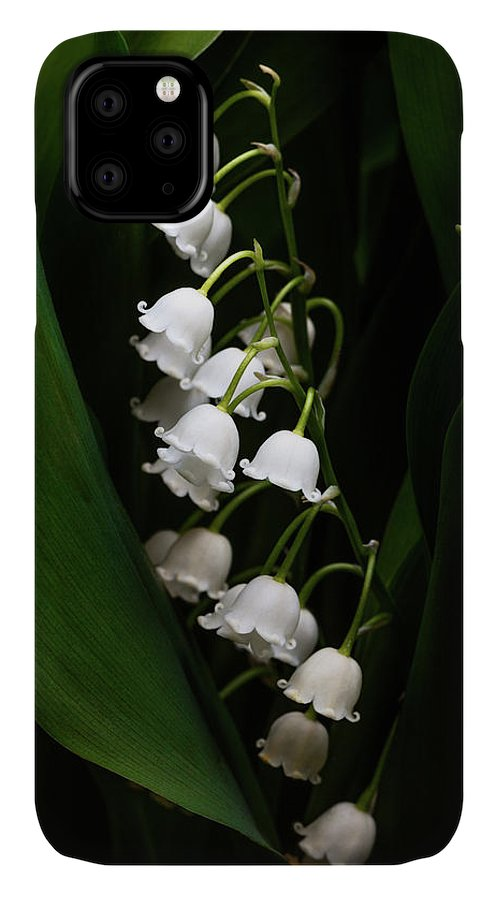 Convallaria Majalis IPhone Case featuring the photograph May Lily Aka Lily Of The Valley by Tom Mc Nemar