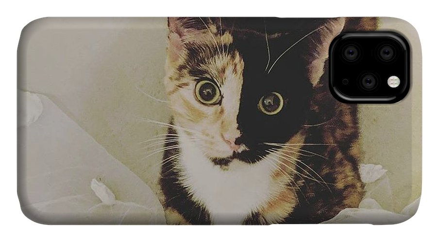 Cute Cat IPhone 11 Case featuring the photograph Meet Star by Star And Ray