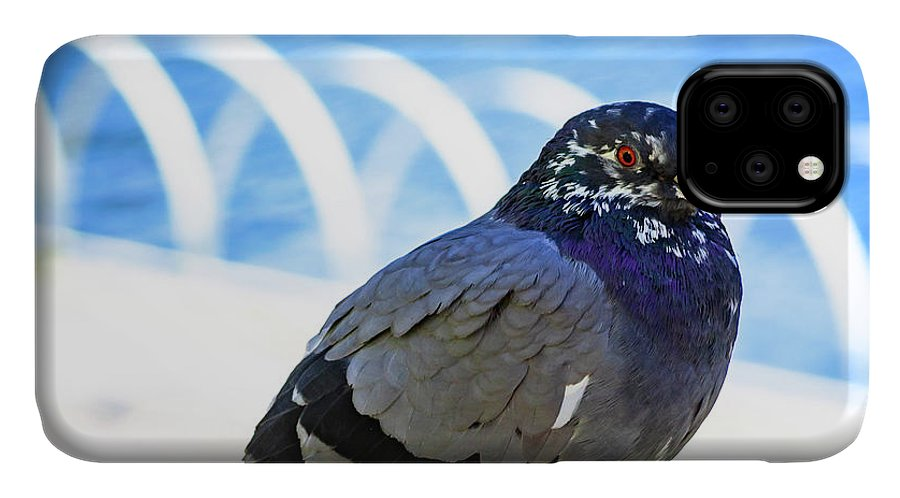 Pigeon IPhone Case featuring the photograph Mr. Pigeon by Borja Robles
