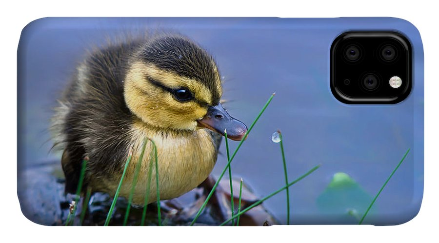 Offspring IPhone Case featuring the photograph Newborn Duckling by Leena Robinson