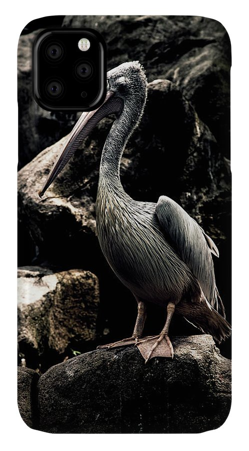 Malaysia IPhone Case featuring the photograph Pelican by Felipe Queriquelli