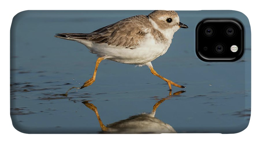 American Fauna IPhone Case featuring the photograph Piping Plover Charadrius Melodus Running by Ivan Kuzmin