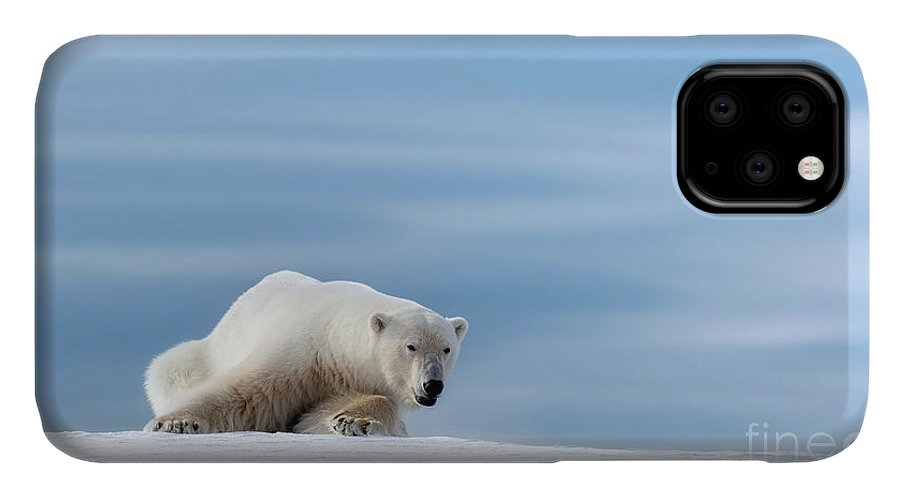 Polar IPhone 11 Case featuring the photograph Polar Bear Crouching On The Frozen Snow Of Svalbard by Jane Rix