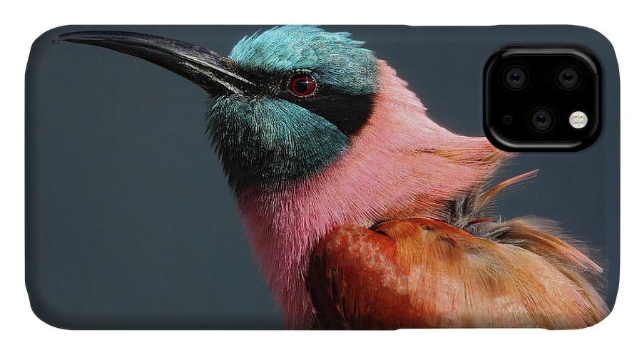 Southern IPhone Case featuring the photograph Portrait Of Pink Northern Carmine by Ondrej Prosicky