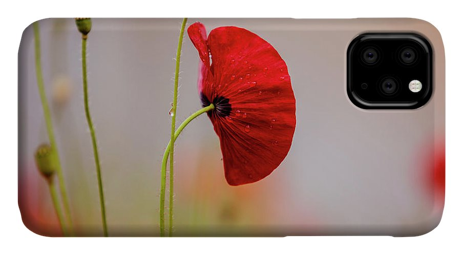 Poppy IPhone Case featuring the photograph Red Corn Poppy Flowers by Nailia Schwarz