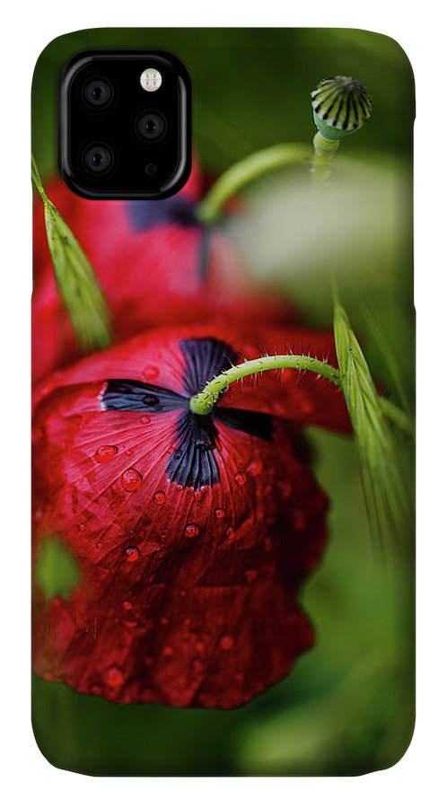 Poppy IPhone Case featuring the photograph Red Corn Poppy Flowers With Dew Drops by Nailia Schwarz