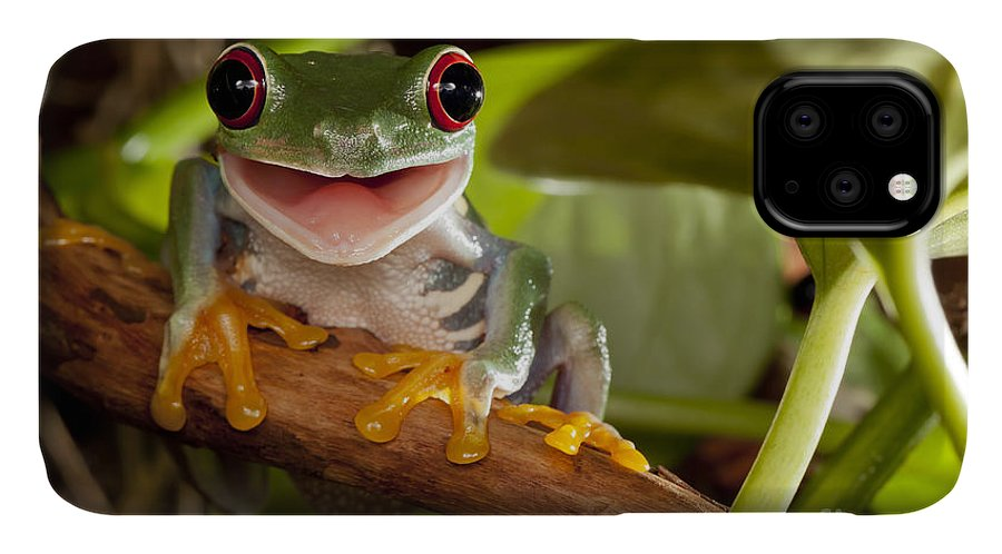 Forest IPhone Case featuring the photograph Red-eyed Tree Frog Smile by Linas T