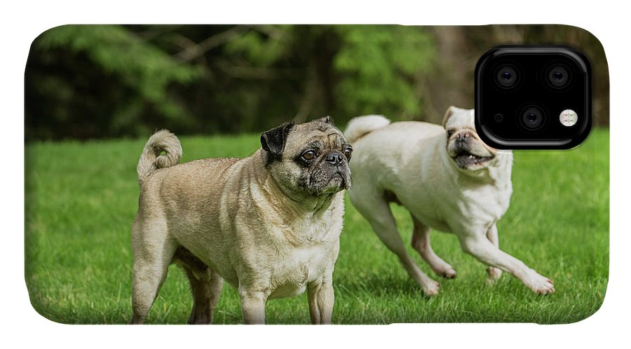Adult IPhone Case featuring the photograph Redmond, Wa Portrait Of A Black Pug by Janet Horton