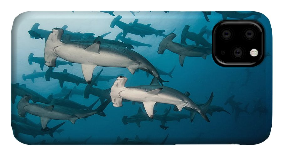 Scalloped IPhone 11 Case featuring the photograph School Of Scalloped Hammerheads by Tomas Kotouc