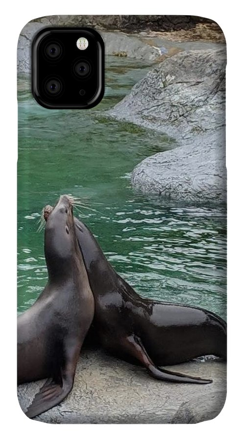 Blue IPhone 11 Case featuring the photograph Seal by Aswini Moraikat Surendran