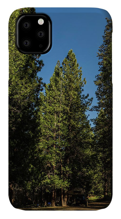 Sequoia Trees IPhone Case featuring the photograph Sequoia Trees by Julieta Belmont