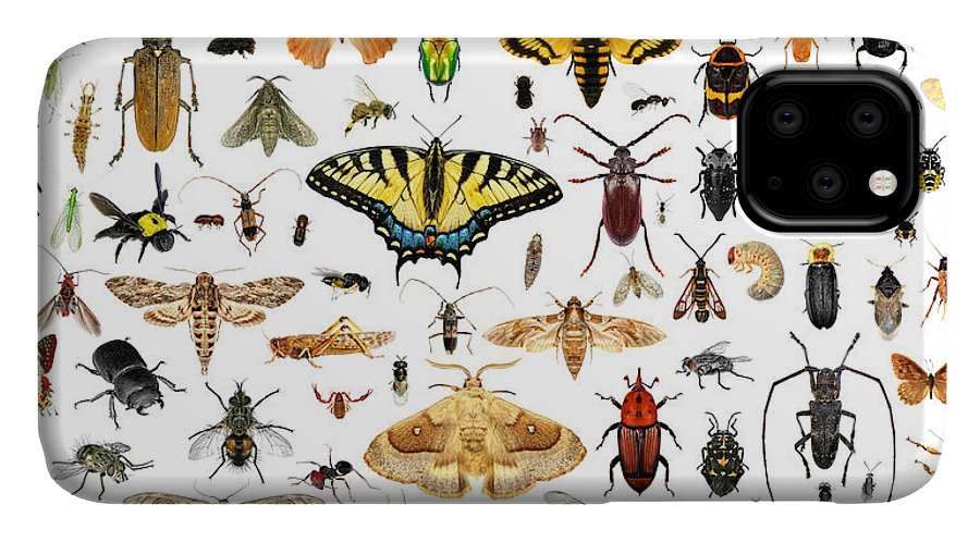 Bee IPhone Case featuring the photograph Set Of Insects On A White Background by Protasov An