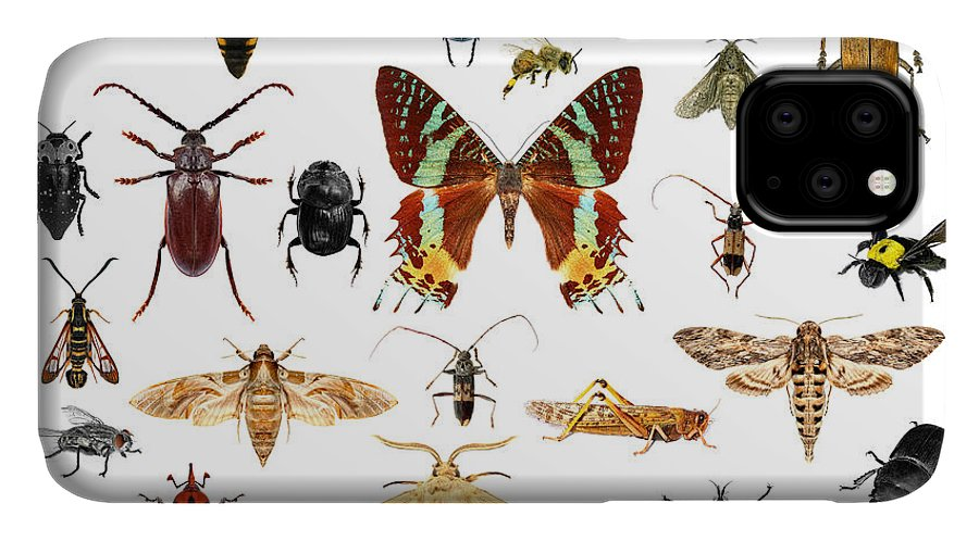 Bee IPhone Case featuring the photograph Set Of Insects On White Background by Protasov An
