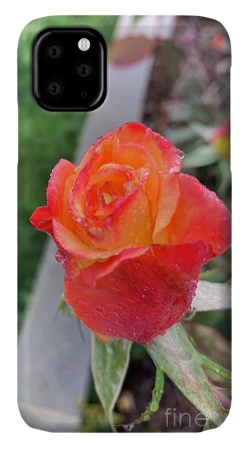 Nature Photo IPhone Case featuring the photograph Single Rose by Epic Luis Art