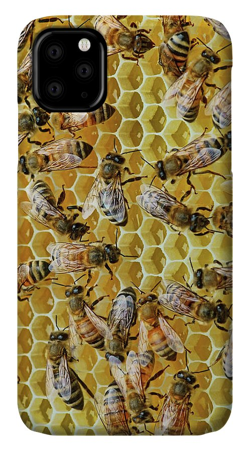 Bees IPhone Case featuring the photograph Sisters by Nikolyn McDonald