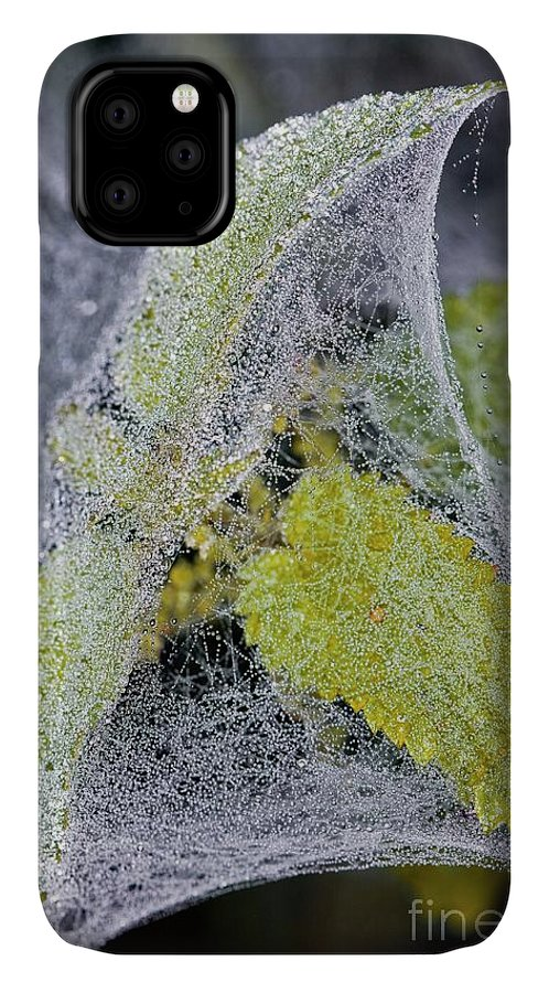 Invertebrate IPhone Case featuring the photograph Spider Gossamer Silk Tent by Dr Keith Wheeler/science Photo Library