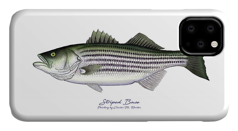 Striped Bass Art IPhone 11 Case featuring the painting Striped Bass by Charles Harden