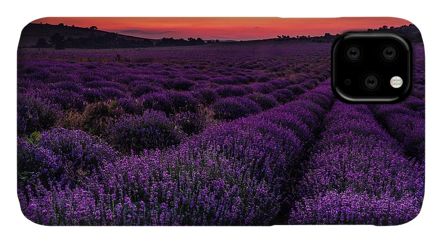 Bulgaria IPhone 11 Case featuring the photograph Sunset Lavender by Evgeni Dinev