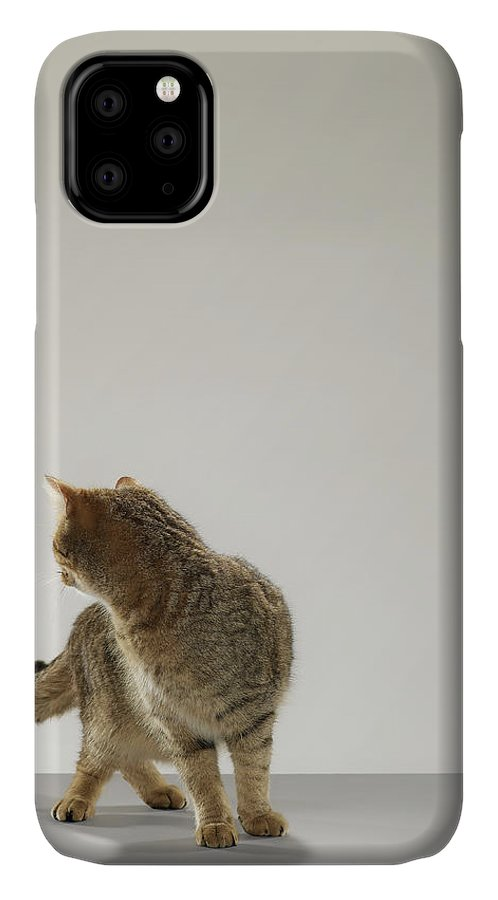 Pets IPhone Case featuring the photograph Tabby Cat Looking Behind by Michael Blann