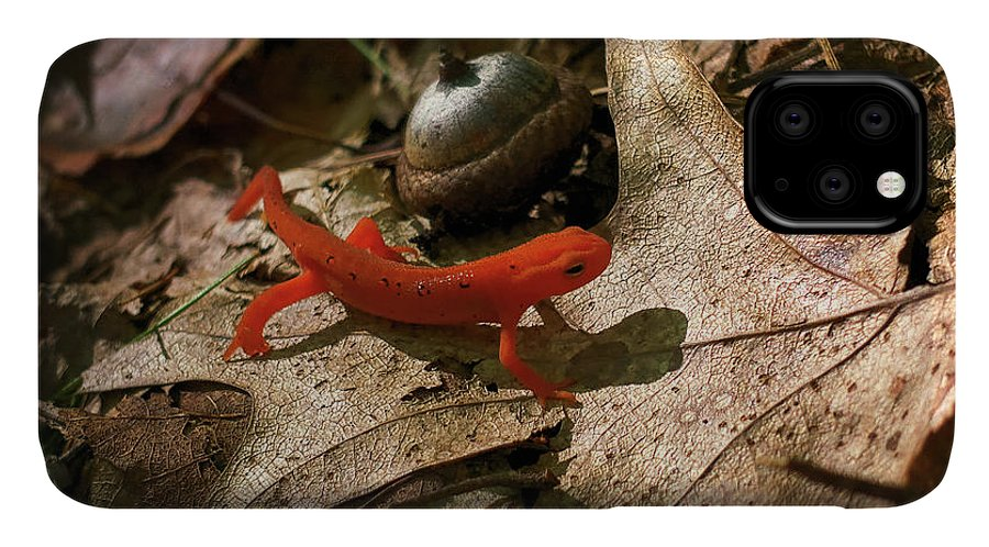 Acorn IPhone 11 Case featuring the photograph The Efts Progress by Jerry LoFaro