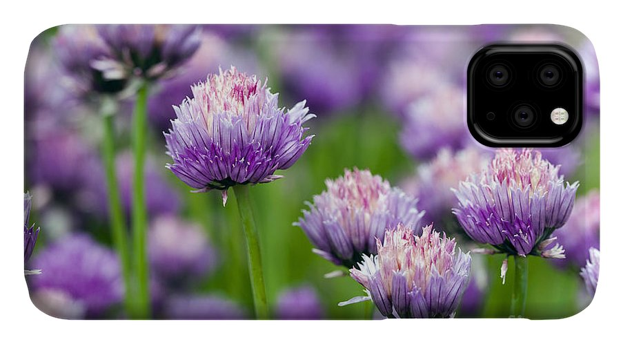 Onion IPhone Case featuring the photograph The Flower Of Garlic Photographed By A by Rsooll