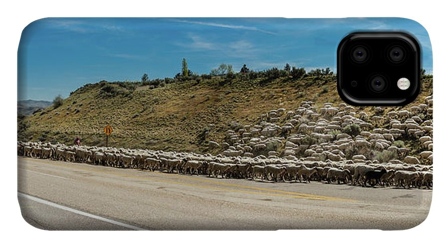 Herd IPhone Case featuring the photograph The Spring Sheep Drive by Robert Bales