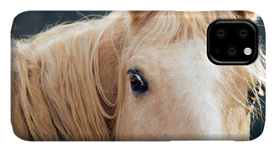 Palomino IPhone Case featuring the photograph Watchful by SL Ernst