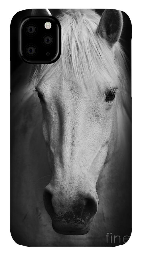 Equestrian IPhone 11 Case featuring the photograph White Horses Black And White Art by Matej Kastelic
