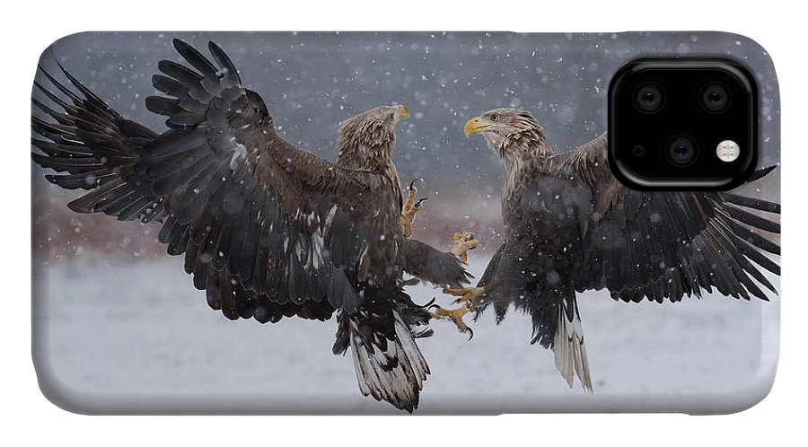 Flight IPhone Case featuring the photograph White Tailed Eagle Haliaeetus Albicilla by Piotr Krzeslak