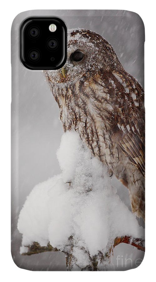 Magic IPhone Case featuring the photograph Winter Wildlife Scene With Tawny Owl by Ondrej Prosicky