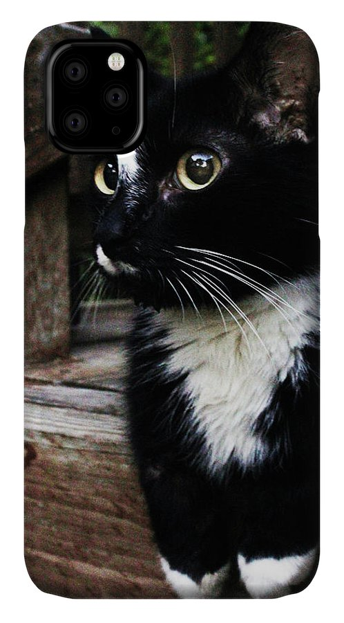 Cat IPhone Case featuring the photograph A Cats Life by Holly Morris