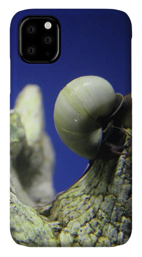 Snail IPhone Case featuring the photograph Blue Snail by Holly Morris