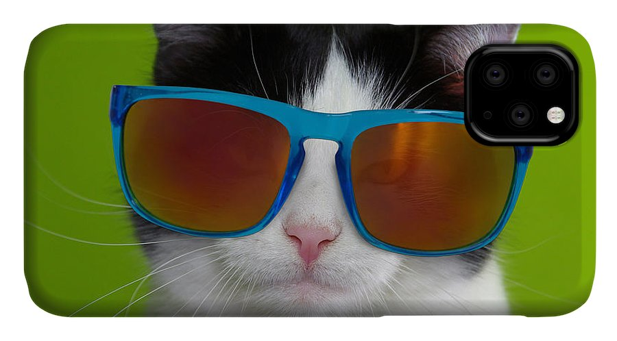 Cat IPhone Case featuring the photograph Cat wearing sunglasses by Courtney Hall