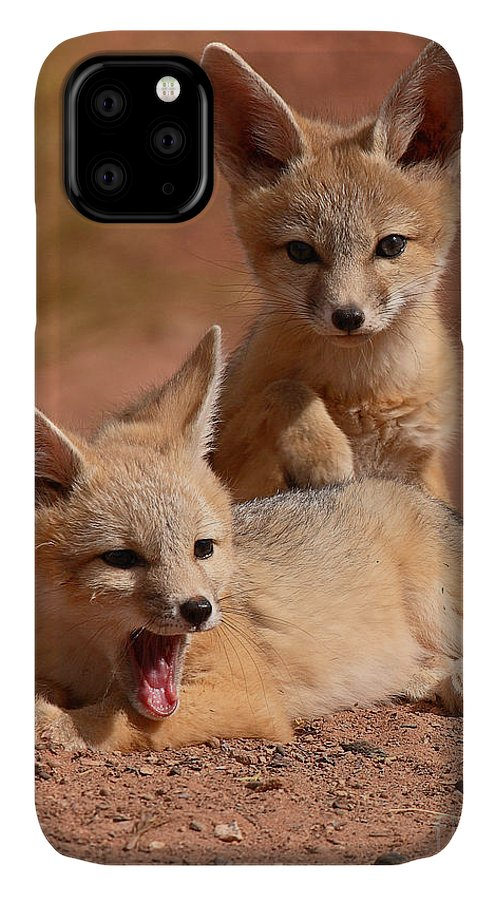 Fox IPhone Case featuring the photograph Kit Fox Twin Pups by Max Allen