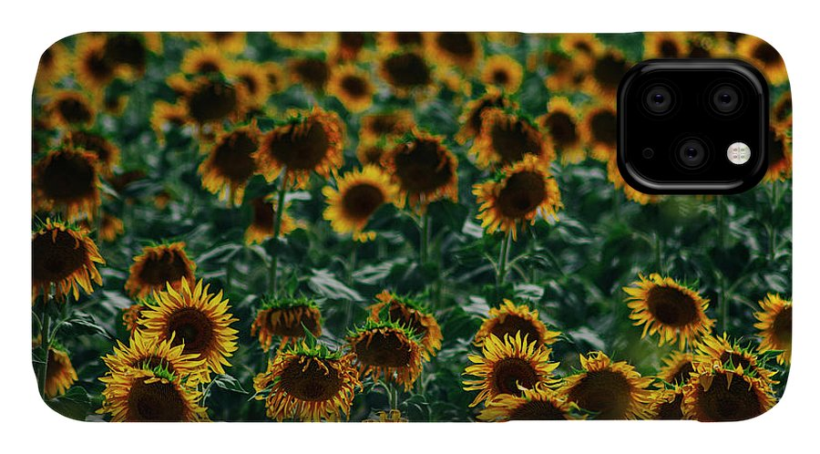 Backlight IPhone Case featuring the photograph Sunflowers Field by Vicente Sargues