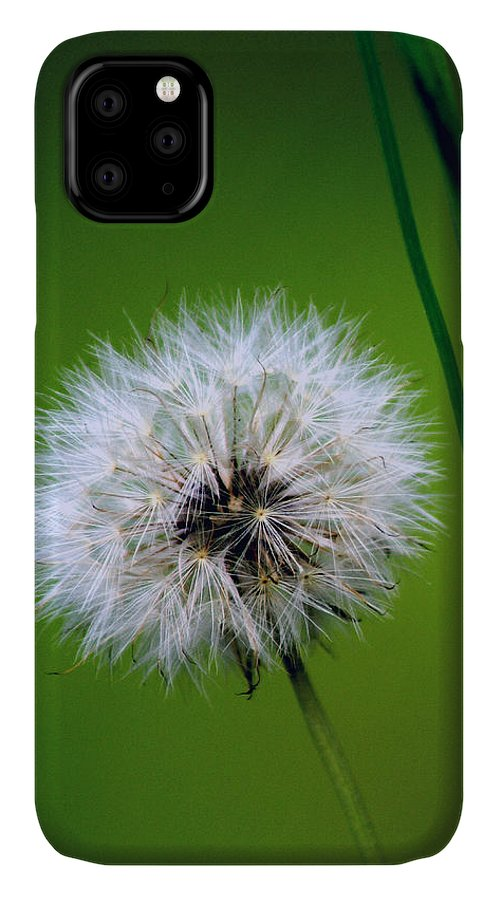 Dandelion IPhone Case featuring the photograph Waiting for the Winds of Deliverance by Holly Kempe